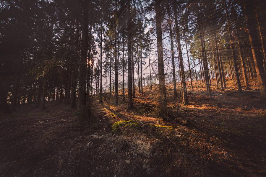 Hürtgenwald - Fotografie - Orths Medien